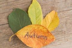 绿色,黄色和桔子离开与题字秋天在木背景 免版税库存图片