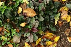 绿色,紫色和黄色叶子,草背景 免版税库存照片