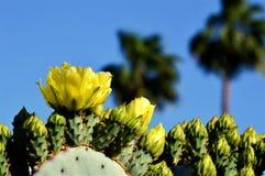 黄色仙人掌花、蓝天和棕榈树 库存照片