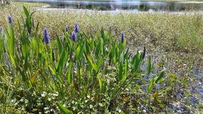 紫色水厂 图库摄影