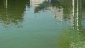 绿色水反射 股票录像