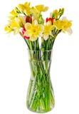 黄色黄水仙和小苍兰花,在一个透明花瓶的红色郁金香,关闭,白色背景,被隔绝 库存图片
