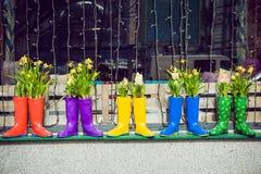 黄色黄水仙和风信花在作为罐使用的多彩多姿的胶靴装饰店面窗口 选择聚焦 免版税库存图片