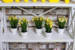 黄色黄水仙在桌上的罐开花 免版税库存照片