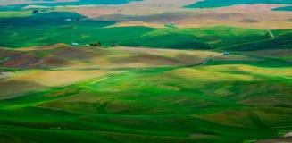 绿色绵延山在春天 库存图片