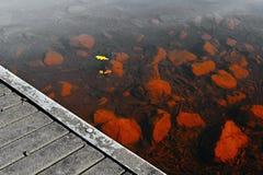 黄色离开在石头在Alum湖Kamencove jezero的水下在Chomutov在夏天旅游季节结束时在Cze 图库摄影