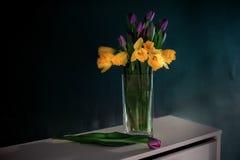 黄色黄水仙开花与开花在有绿色墙壁的花瓶的紫色郁金香 免版税库存照片