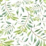 绿色水彩橄榄树枝 免版税库存照片