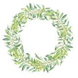 绿色水彩橄榄树枝 库存照片