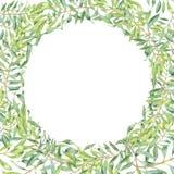 绿色水彩橄榄树枝 免版税库存图片