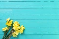 黄色水仙或黄水仙在蓝绿色木backg开花 免版税库存照片