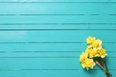 黄色水仙或黄水仙在绿松石木backgro开花 库存图片