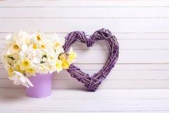 黄色水仙或黄水仙在紫罗兰色罐和得体开花 免版税图库摄影
