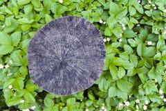 绿色围拢的树桩横断面裁减离开背景 库存照片