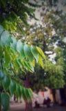 绿色结构树叶子 免版税图库摄影