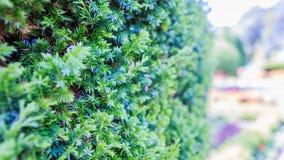 绿色结构树在庭院里 库存照片