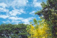 黄色结构树 图库摄影