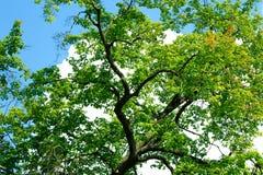 绿色结构树 库存图片