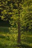 绿色结构树 免版税库存图片
