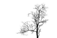 黑色结构树 库存图片