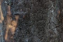 黑色从森林的被烧的树 库存图片