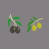 黑色绿橄榄 库存图片