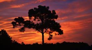 紫色/橙色日落 库存照片
