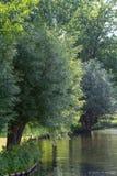 绿色50片树荫  图库摄影