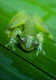 绿色玻璃青蛙 免版税库存照片