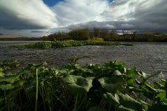 绿色水生植物在河床上 免版税库存照片