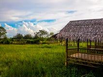 绿色稻田和竹子小屋 库存图片