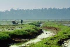 绿色稻田的农夫在早晨 免版税库存图片