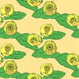黄色水百合 库存图片