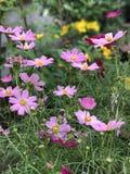 紫色&红色花 库存图片