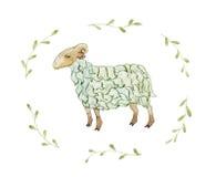 绿色绵羊 免版税库存照片