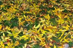 绿色黄色下落的叶子地毯 库存图片