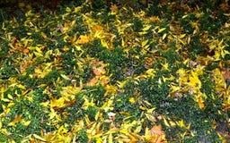 绿色黄色叶子地毯 库存照片