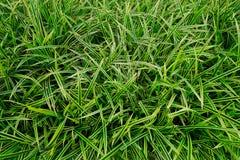绿色黄色叶子背景,草 免版税库存照片
