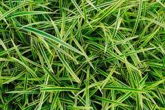 绿色黄色叶子背景,草 免版税库存图片