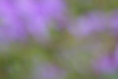 绿色紫色夏天背景-迷离储蓄照片 免版税库存图片