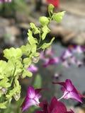 绿色&紫色用花装饰 图库摄影