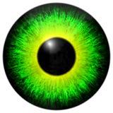 绿色黄色眼睛虹膜 免版税库存图片