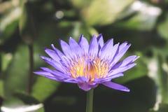 紫色黄色花 免版税图库摄影