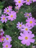 紫色&黄色花 库存图片