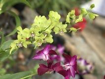 绿色&紫色花 库存图片