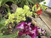 绿色&紫色花 库存照片