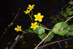 黄色水花 库存照片