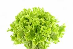 绿色莴苣叶子 免版税库存图片