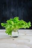 绿色莴苣叶子  图库摄影