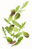 绿色莴苣沙拉叶子 免版税库存图片